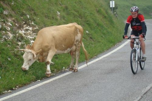 Kävelevää Ricotta-juustoa!